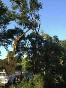Mister Tree Service