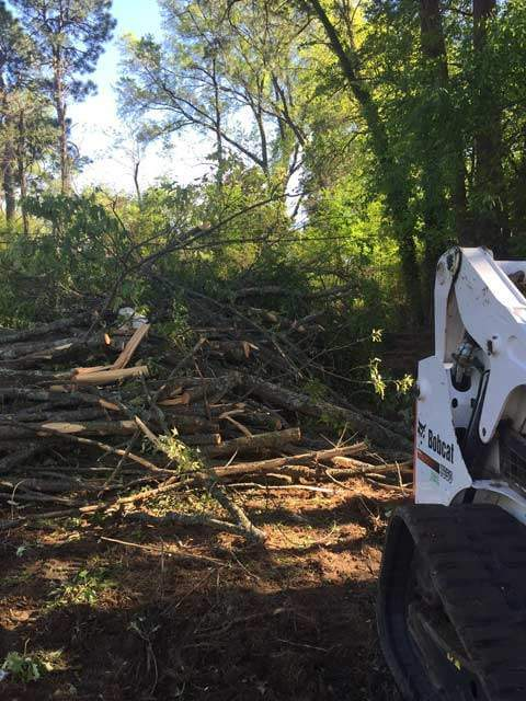 Lot Clearing Trees