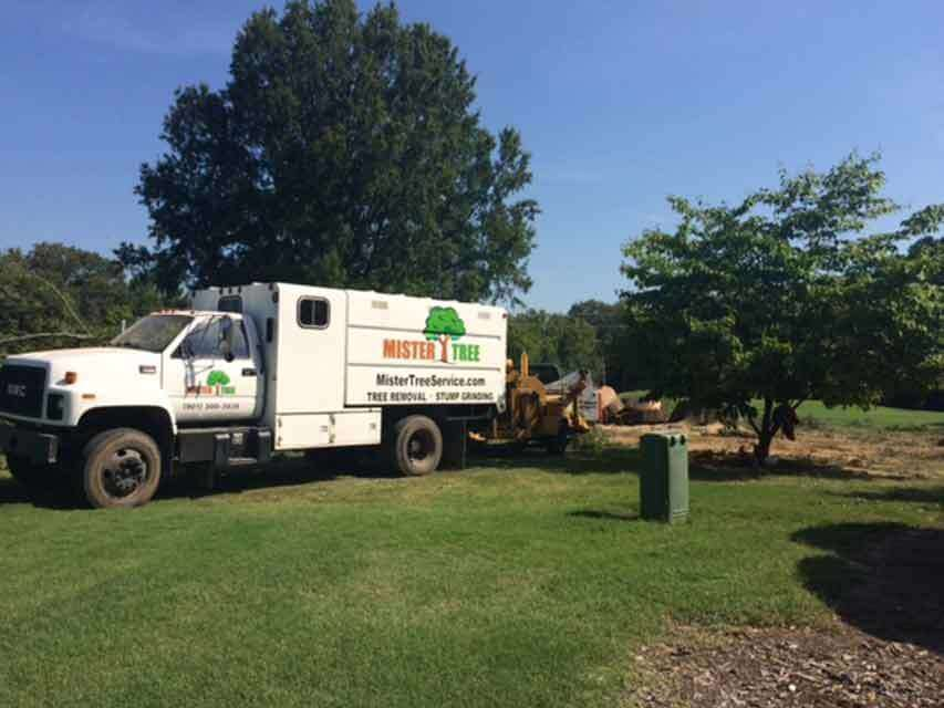 Tree Removal Memphis