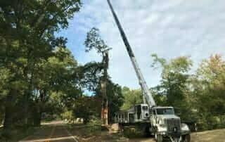 oak tree removal in bartlett