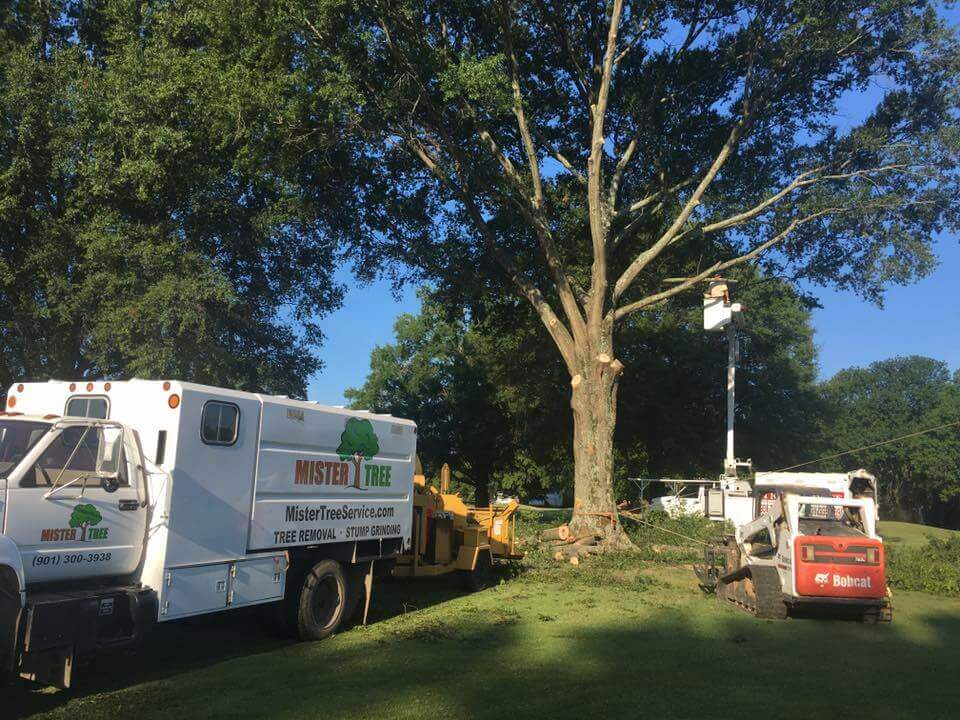 Tree Service In Memphis TN