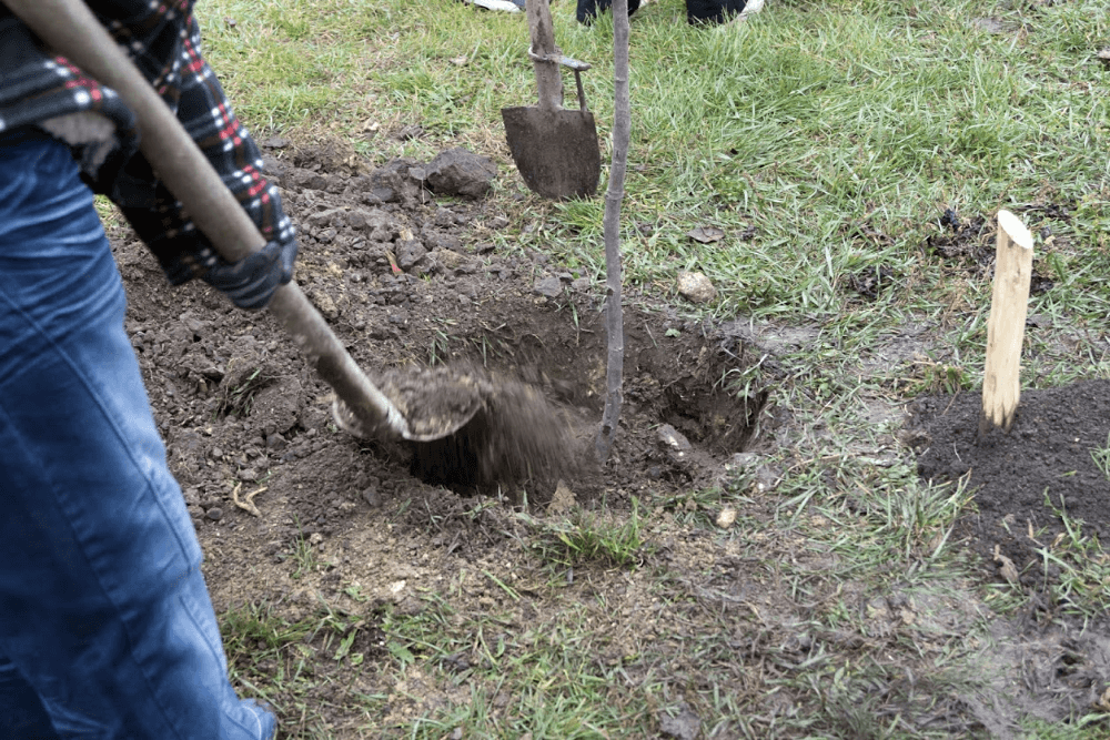 4 Reasons to Plant Trees in the Fall