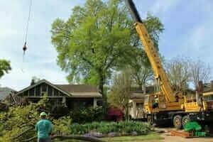 Arborist Near Me In Collierville Mister Tree Service