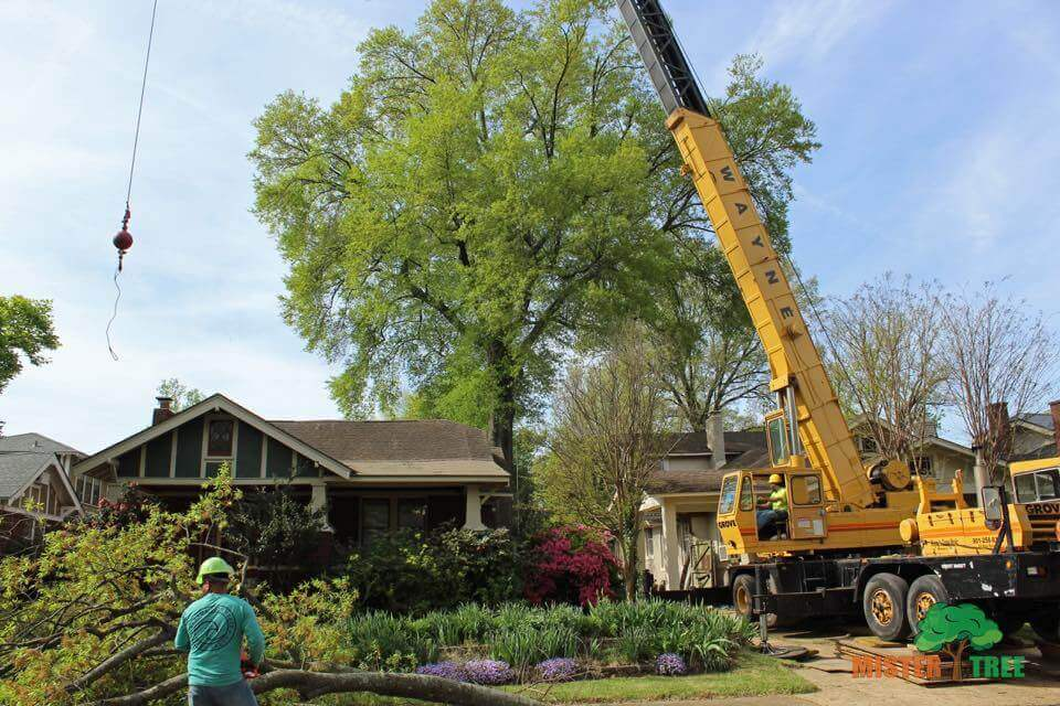 Arborist Near Me In Collierville Mister Tree Service