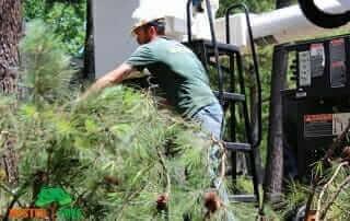 pruning or shearing