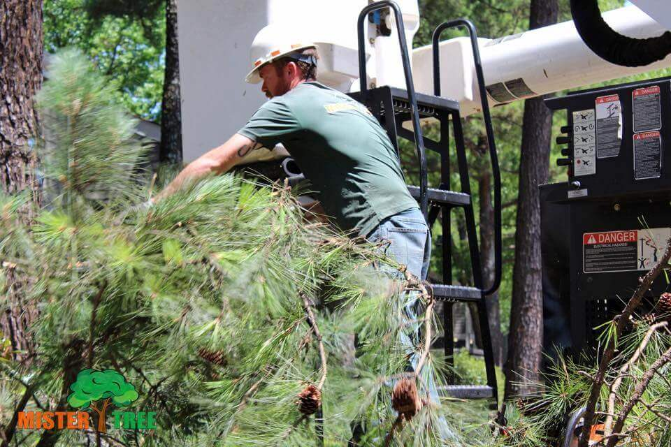Tree Pruning In Memphis