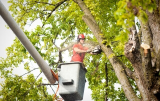 Why Hire An Arborist_ Mister Tree Service