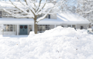 How to Protect Your Trees During Winter Mister Tree Service