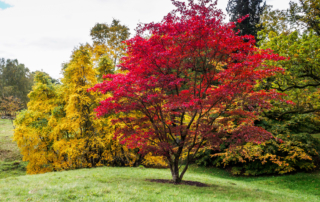 Trees To Add (Or Remove) To Increase Your Property Value Mister Tree Service