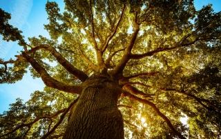 best tree service Mister Tree Service Memphis
